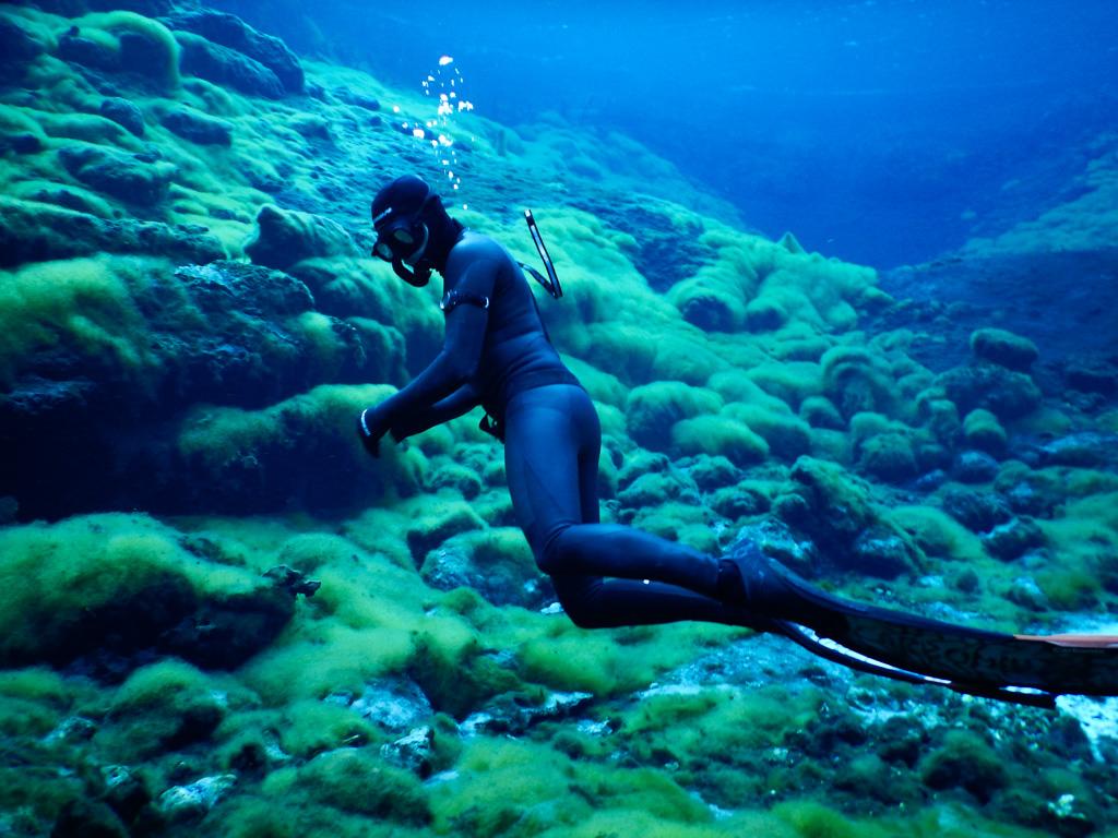 PADI Freediver Journey Flow