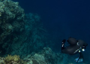 Marlon Quinn Freediving with Reef Sharks
