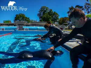 Geelong Freediving Course Pool Training