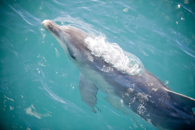 Dolphin Watching Tour near Melbourne