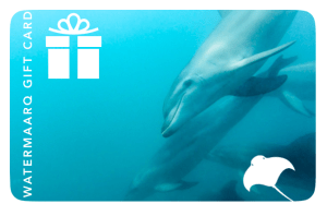WaterMaarq Sorrento Dolphin and Seal Tours Gift Card 100 Dollars Value