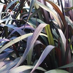 Graceful Grasses Vertigo