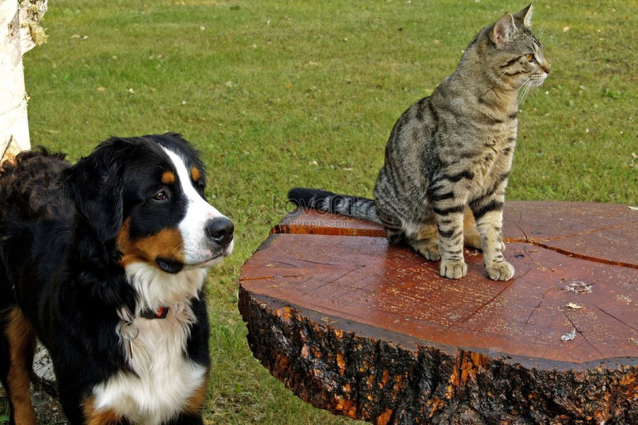 một con mèo và một con chó nhìn về phía trước