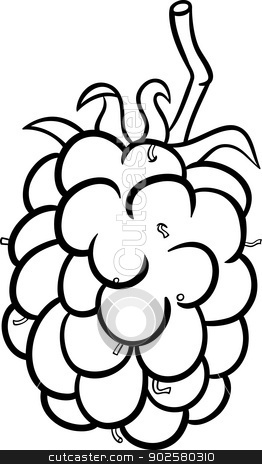 blackberry illustration for coloring book stock vector