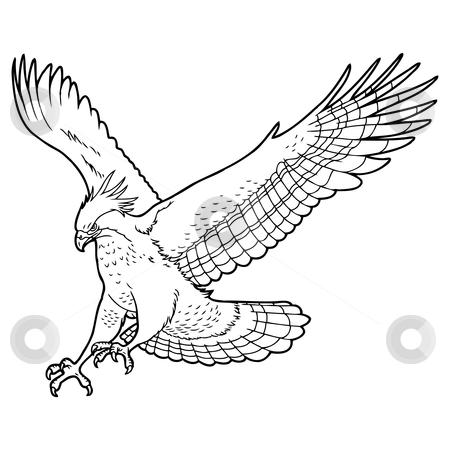 Eagle stock vector