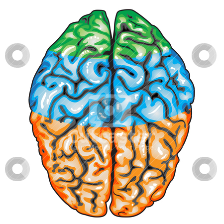 brain diagram without labels raymarine wiring diagrams asovislan human heart with