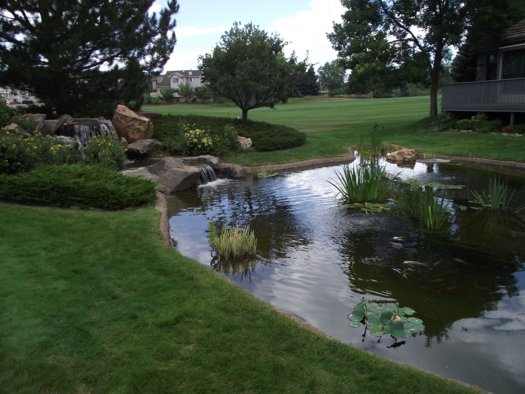 The Gallery For > Large Backyard Ponds