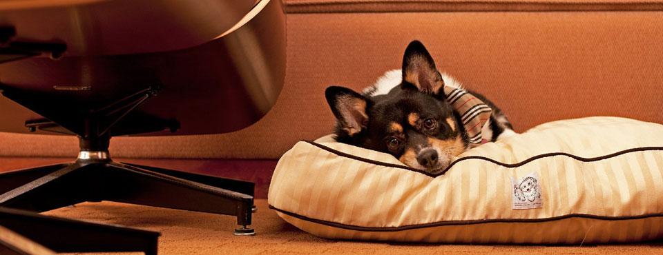 Pett on a large pillow at the Hyatt Regency Orlando on International Drive in Orlando Fl