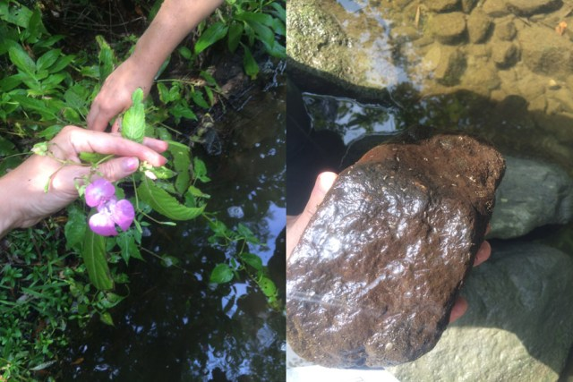 Left: One of the invasive species they have been focusing on this year. Right: You can begin to get a sense of a stream's health by looking under rocks. The more variety, the better. In this case, there was only a single type of highly successful bug suggesting that water quality might not be perfect.