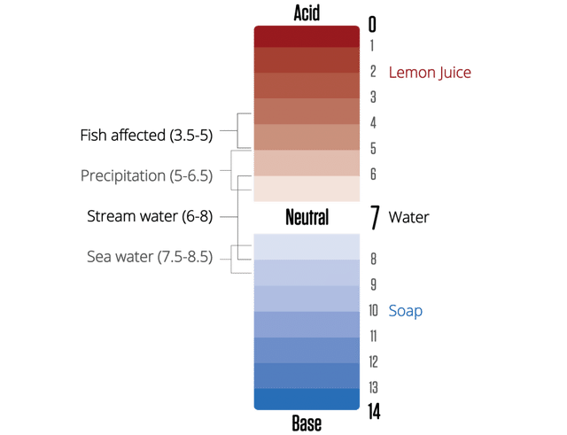 A graphic displaying the pH scale with common examples of substances labelled. Acids have a pH less than 7, and bases have a pH >7. Stream water is usually has a pH between 6-8.