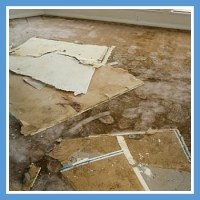 flood-damage-carpet-blue - Water Restoration Pros of ...