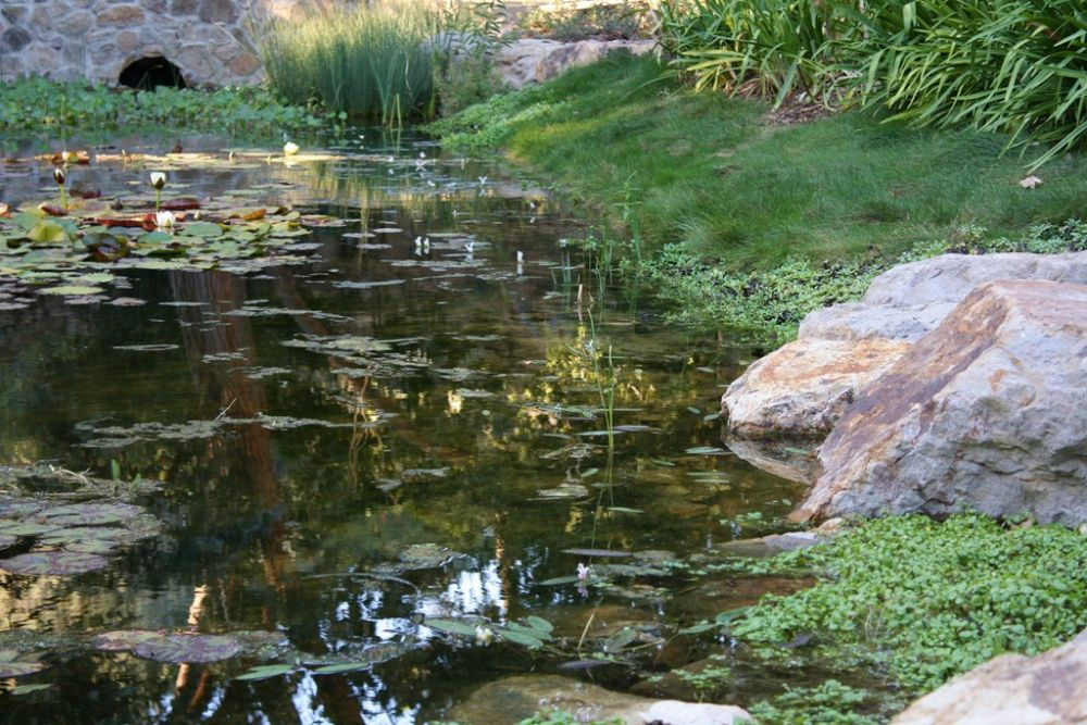 Pond Shapes And Design