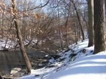Winter Woods & Creek