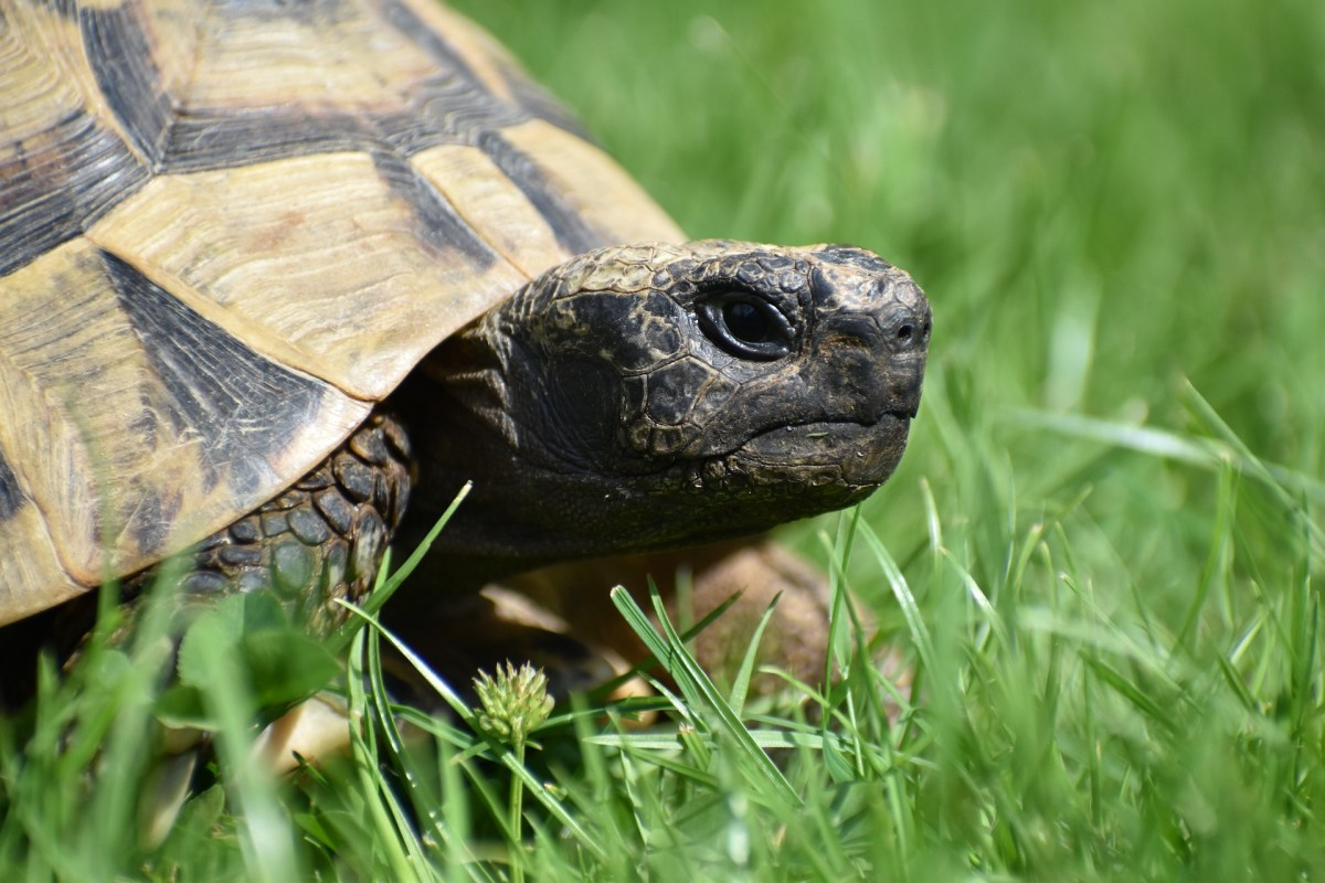 May 29th, 11:00 AM, Silent and Facinating – An Introduction to Reptiles and Amphibians