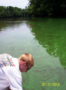 Image courtesy of Dr. Mike Mallin.  Algal bloom in lower NC's Cape Fear River.