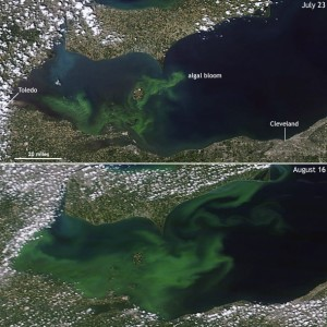 Algal bloom on Lake Eerie, 2015 (Source: NOAA)