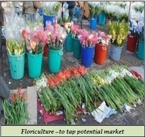 Floriculture –to tap potential market