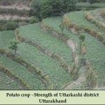 Potato crop –Strength of Uttarkashi district