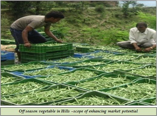 Off season vegetable in Hills –scope of enhancing market potential