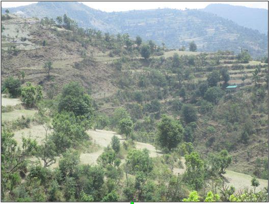 A glimpse of Terrace farming