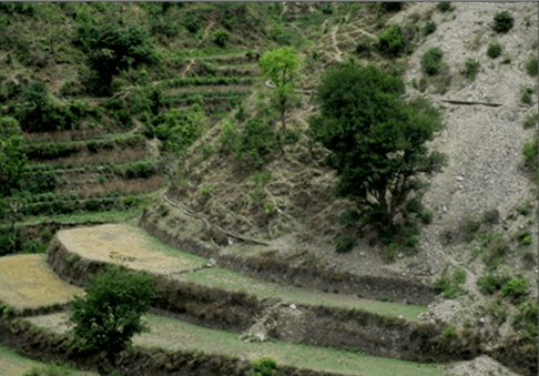 Terrace farming in hilly tracts
