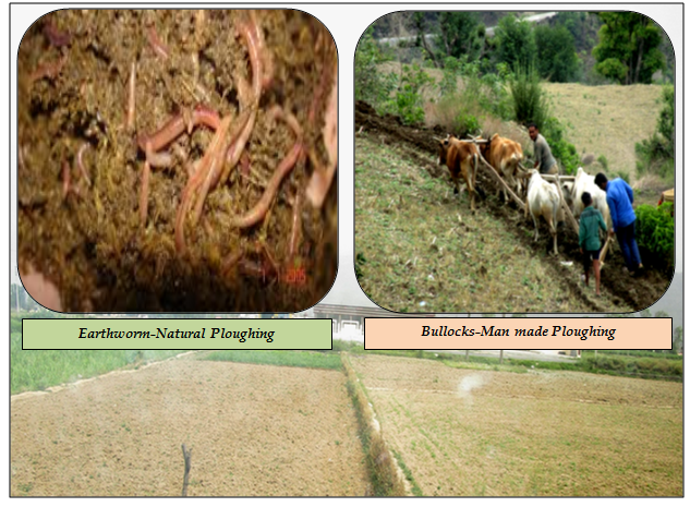 Significance of Earthworm in soil health of watershed