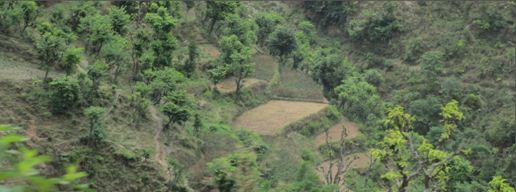Soil conservation by making terraces & preventing erosion by wind breaks