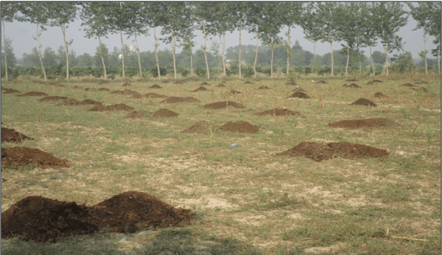 Use of decomposed cowdung is significant in soil biodiversity
