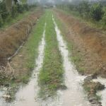 Drip irrigation- a need for an effective irrigation