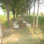 Honey bee boxes in the Agriculture farm