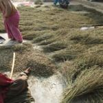 Threshing operations done by woman in hills