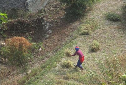 Women cleaning the agriculture field in hills