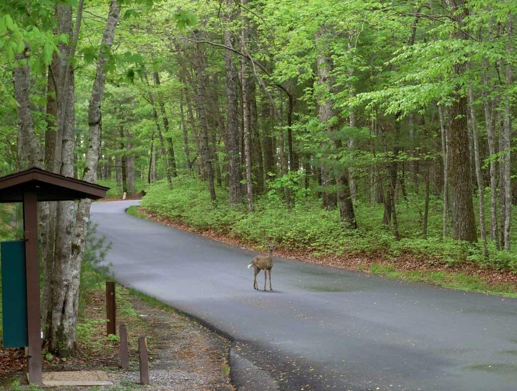 sherwood forest deer
