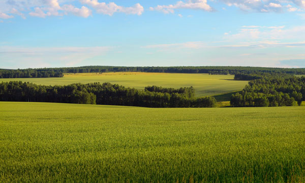 green-fields-and-hills-600