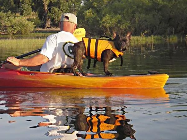 kayak for dogs