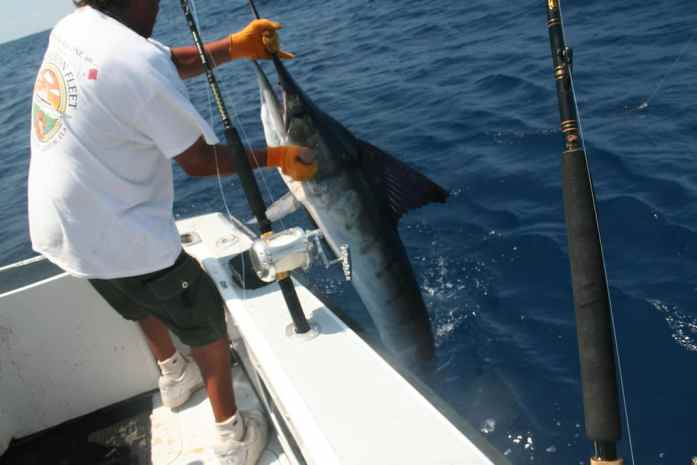 best bait for marlin