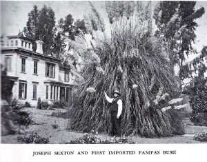 Notice how the pampas towers over John Sexton!