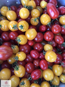 grape and cherry tomatoes red and yellow