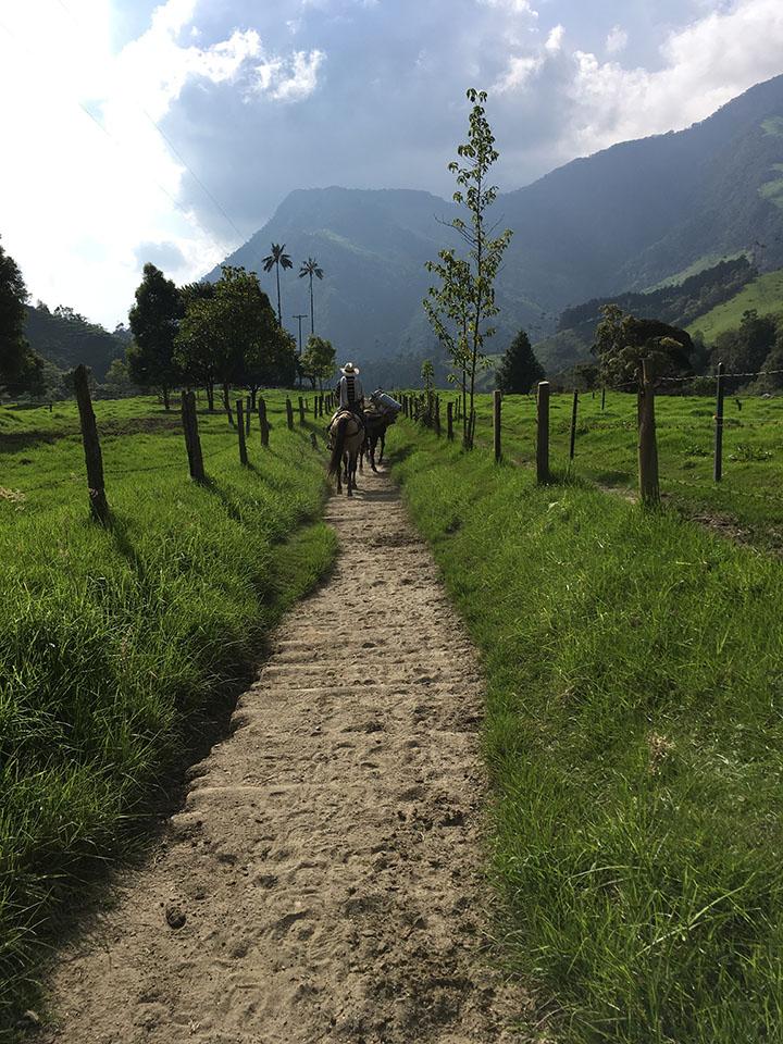 Vallée de Cocora, Mule