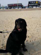 Last Day. So happy at he beach