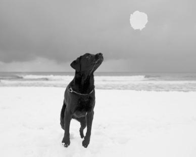 Action Dog