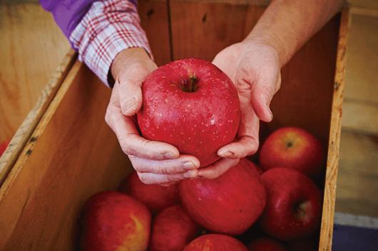 apple-kingdom3