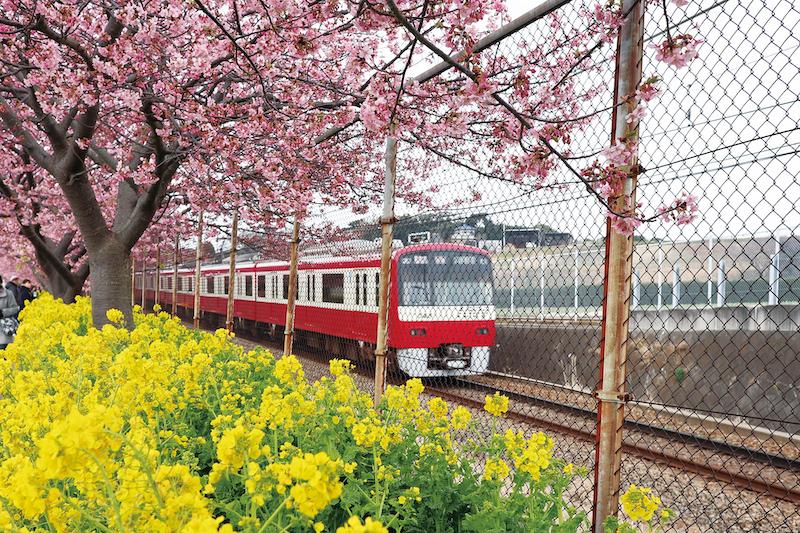 ลองถ่ายรูปคาวาสึซากุระกับรถไฟที่วิ่งอยู่