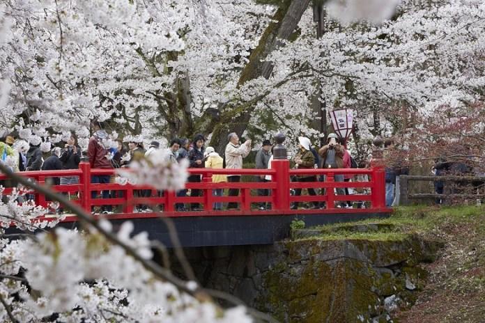 Hirosaki-Sakura-day_450