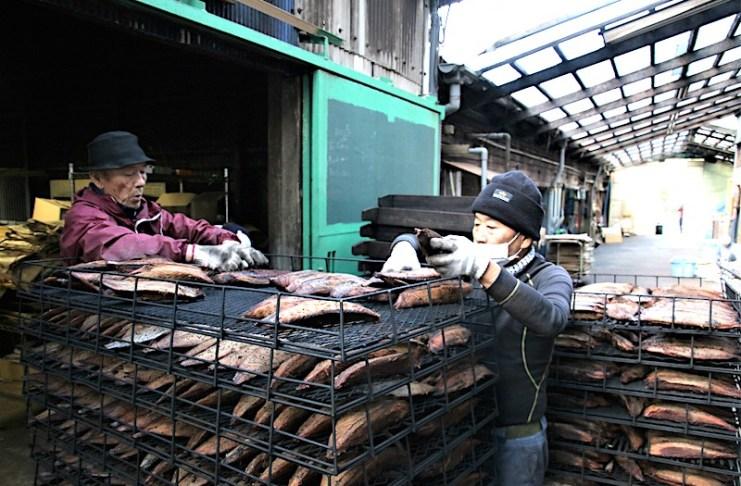 カネサ鰹節商店的鹽醃鰹魚製作過程