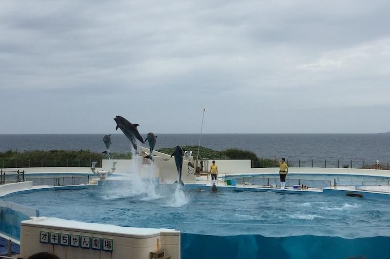 每天定時舉行5場的海豚劇場