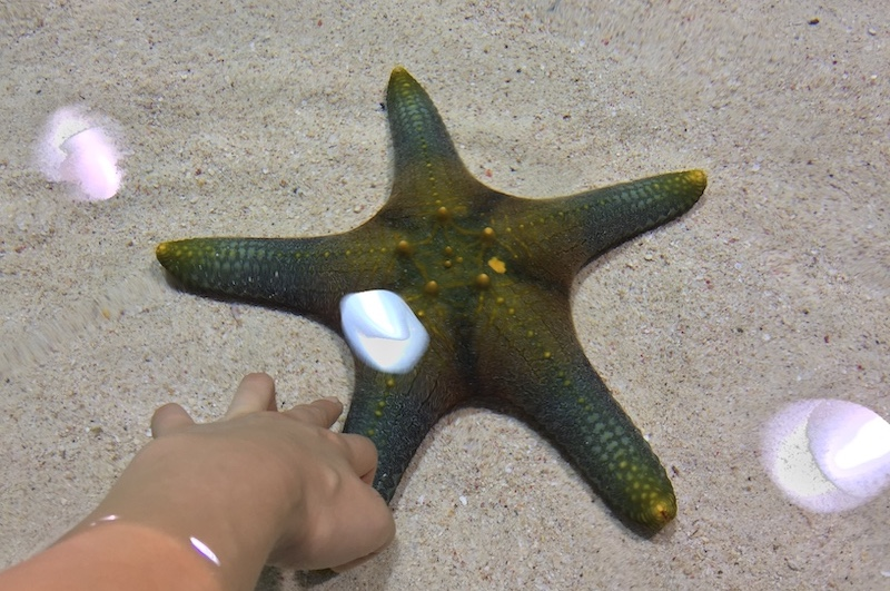 小朋友可以透過觸摸淺灘生物