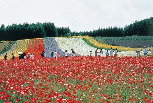 Autumn-Field