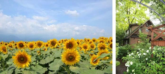 hokuto-flowers