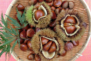 Chestnut_s